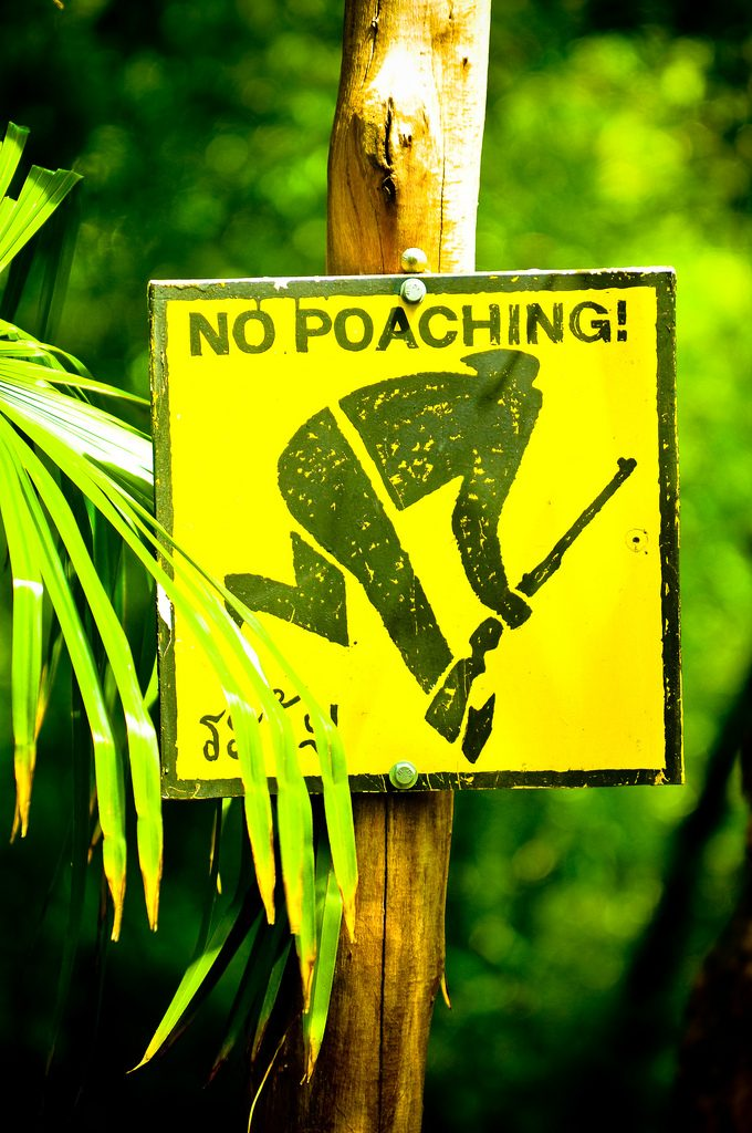 Beware of poachers